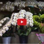 新宿 花屋 フラワーショップ ミスト 東京都新宿区歌舞伎町2-23-12 チェックメイトビル1F
